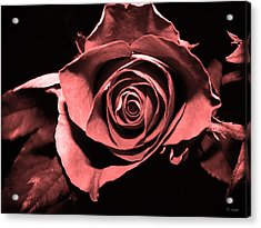 Red Pink Rose  Acrylic Print by Yvon van der Wijk