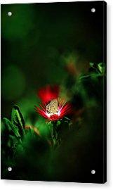 Red Planet Acrylic Print by Suradej Chuephanich