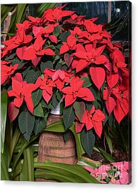Red Poinsettia Acrylic Print by Kathleen Struckle