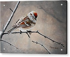 Red Poll Acrylic Print by Pam Kaur