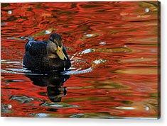 Red Pond Acrylic Print by Karol Livote