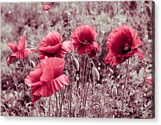red poppies II Acrylic Print by Hannes Cmarits