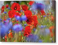 Red Poppies In The Maedow Acrylic Print by Heiko Koehrer-Wagner