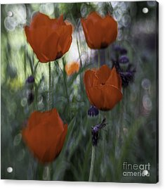 Red Poppies Acrylic Print by Jean OKeeffe Macro Abundance Art
