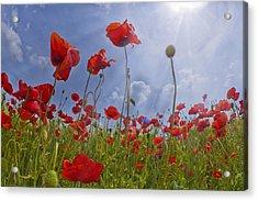 Red Poppy And Sunrays Acrylic Print by Melanie Viola