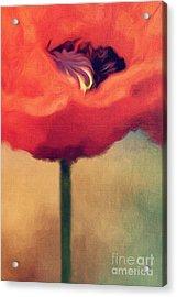 Red Poppy Acrylic Print by Rosie Nixon
