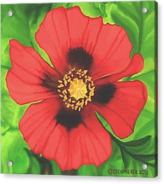 Acrylic Print featuring the painting Red Poppy by Sophia Schmierer