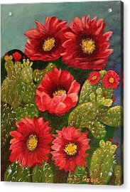 Red Prickley Pear Cactus Flower Acrylic Print by Janis  Tafoya