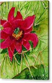 Red Prickly Pear Acrylic Print