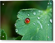 Acrylic Print featuring the photograph Red Rain Drop by Sabine Edrissi