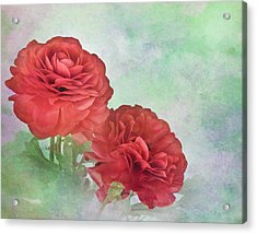Red Ranunculus Acrylic Print by David and Carol Kelly