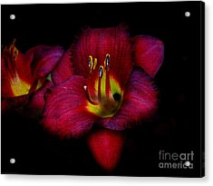 Red Red Lily Acrylic Print by Gena Weiser