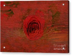 Red Red Rose Acrylic Print by Kathleen Struckle