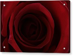 Acrylic Print featuring the photograph Red Red Rose by Keith Hawley