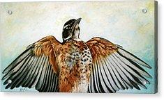 Red Robin Bird Realistic Animal Art Original Painting Acrylic Print