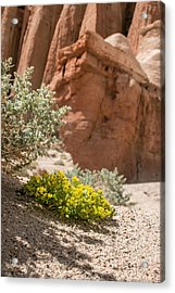 Red Rock Blooming Acrylic Print by Jan Davies