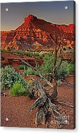 Acrylic Print featuring the photograph Red Rock Butte And Juniper Snag Paria Canyon Utah by Dave Welling