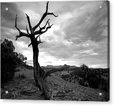 Red Rocks Dead Tree Acrylic Print