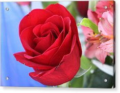 Red Rose - 01131 Acrylic Print by DC Photographer