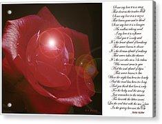 Red Rose Acrylic Print by A Gurmankin
