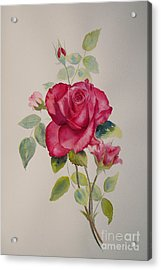 Acrylic Print featuring the painting Red Rose by Beatrice Cloake