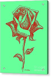 Red Rose Drawings 8 Acrylic Print by Gordon Punt