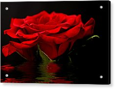 Red Rose Flood Acrylic Print by Steve Purnell
