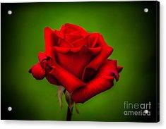 Red Rose Green Background Acrylic Print by Az Jackson