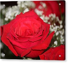 Red Rose Acrylic Print by Kimber  Butler