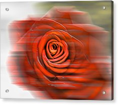 Acrylic Print featuring the photograph Red Rose by Leif Sohlman