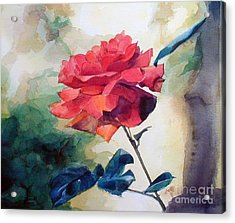 Watercolor Of A Single Red Rose On A Branch Acrylic Print