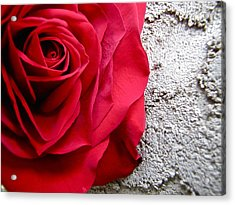 Red Rose On Wall Acrylic Print