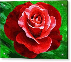 Red Rose Radiance Acrylic Print