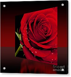 Acrylic Print featuring the photograph Red Rose by Shirley Mangini