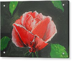 Red Rose Study Acrylic Print by Kathy Spall