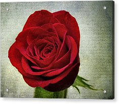 Red Rose V2 Acrylic Print