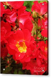Red Roses And Raindrops Acrylic Print by Margaret Newcomb