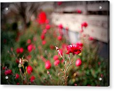 Red Roses On Film Acrylic Print by Linda Unger