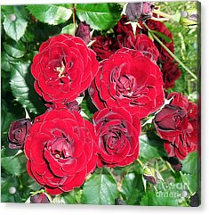 Acrylic Print featuring the photograph Red Roses by Vesna Martinjak