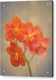 Red Scarlet Orchid On Grunge Acrylic Print