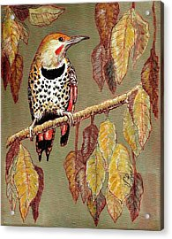 Acrylic Print featuring the painting Red Shafted Flicker by VLee Watson