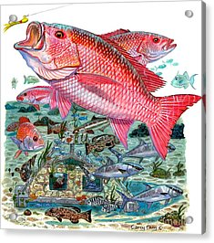 Red Snapper Acrylic Print by Carey Chen
