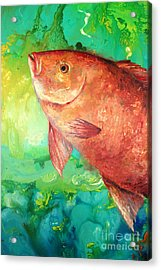 Red Snapper Acrylic Print
