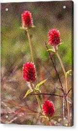 Red Spiky Flowers Acrylic Print by Karen Stephenson