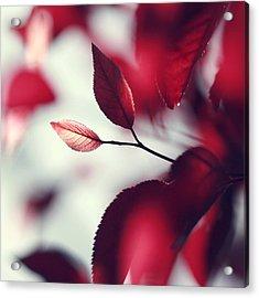 Red Spring Acrylic Print by Beata  Czyzowska Young