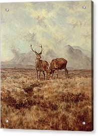 Red Stags, Ben Buie Acrylic Print