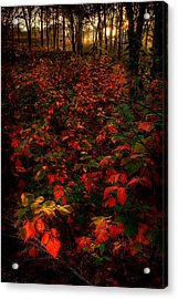 Red Sumac Acrylic Print by Robert Charity