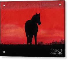 Red Sunset Horse Acrylic Print by D Hackett