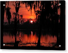 Red Swamp Acrylic Print