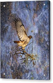 Acrylic Print featuring the digital art Red-tailed Hawk Applauding The Early Morning Sunrise by J Larry Walker